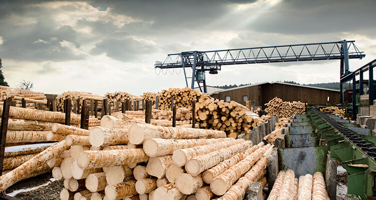 piles of cut logs